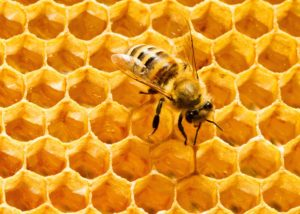 hexagon and beehives